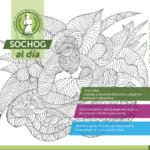 SOCHOG AL DÍA – Edición N° 13